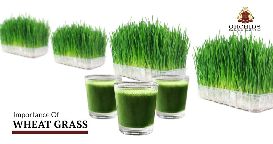 Wheat grass juice- home remedies for International Thalassemia Day