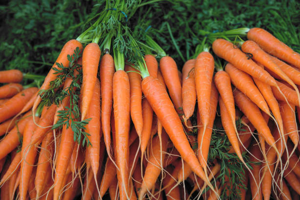 Fresh carrot bunches